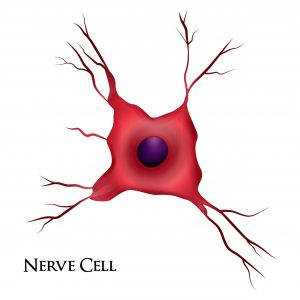 A graphic image of a nerve cell, representing the phrenic nerve.