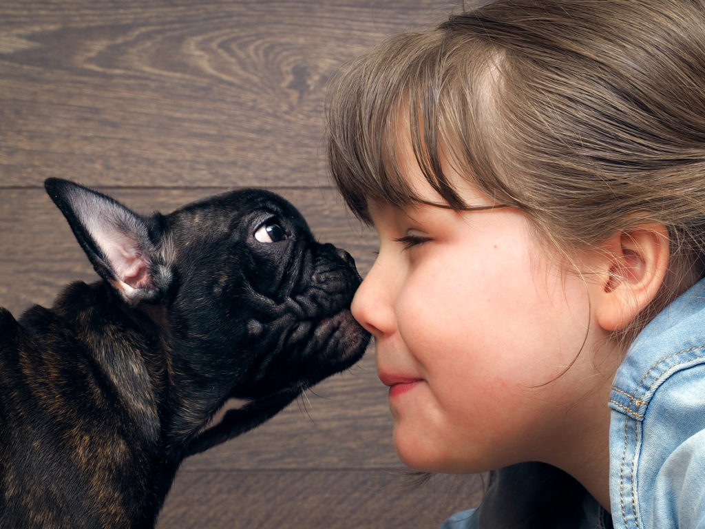 A little girl and a french bulldog touch noses, showing that pet allergies don't have to stop you from owning a furry or feathery companion.